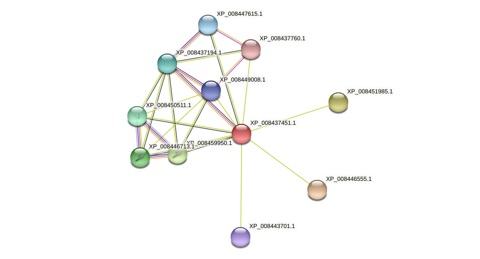 XP_008437451.1 protein (Cucumis melo) - STRING interaction network