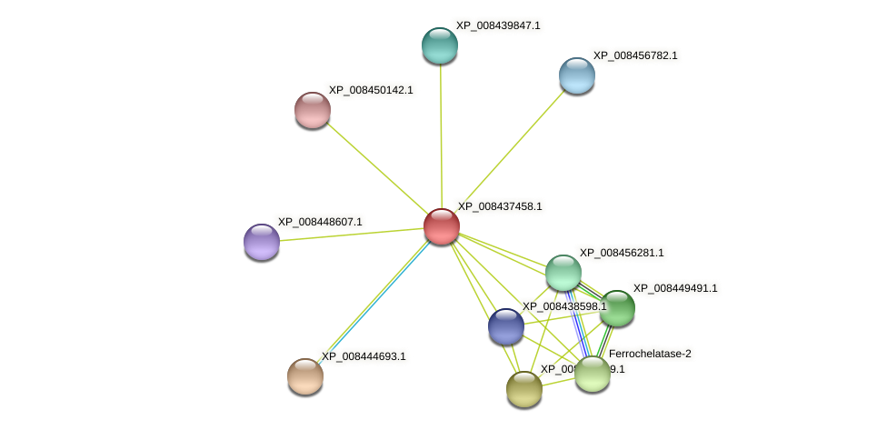 XP_008437458.1 protein (Cucumis melo) - STRING interaction network