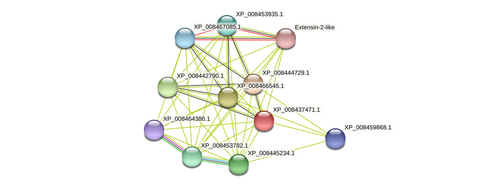 XP_008437471.1 protein (Cucumis melo) - STRING interaction network