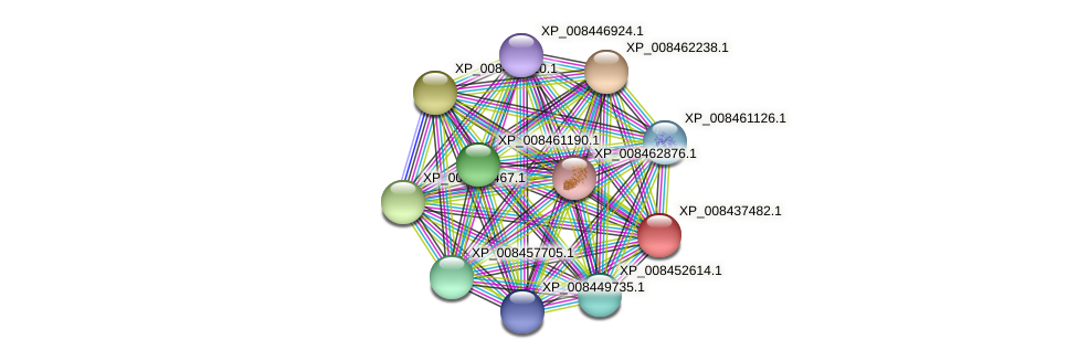 XP_008437482.1 protein (Cucumis melo) - STRING interaction network