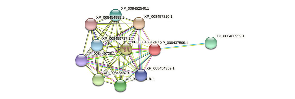 XP_008437509.1 protein (Cucumis melo) - STRING interaction network