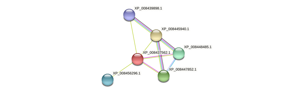 XP_008437562.1 protein (Cucumis melo) - STRING interaction network