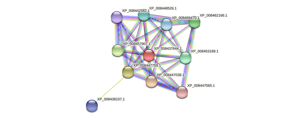 XP_008437644.1 protein (Cucumis melo) - STRING interaction network
