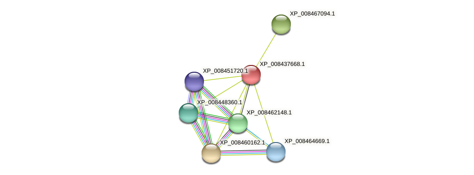 XP_008437668.1 protein (Cucumis melo) - STRING interaction network