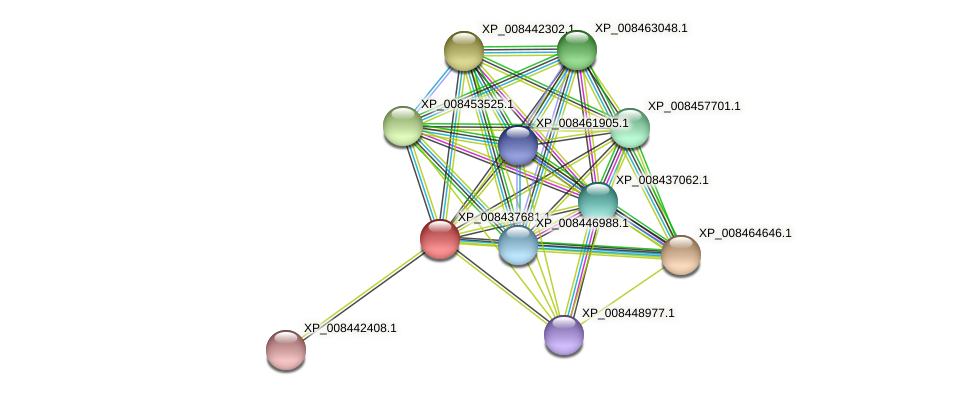 XP_008437681.1 protein (Cucumis melo) - STRING interaction network