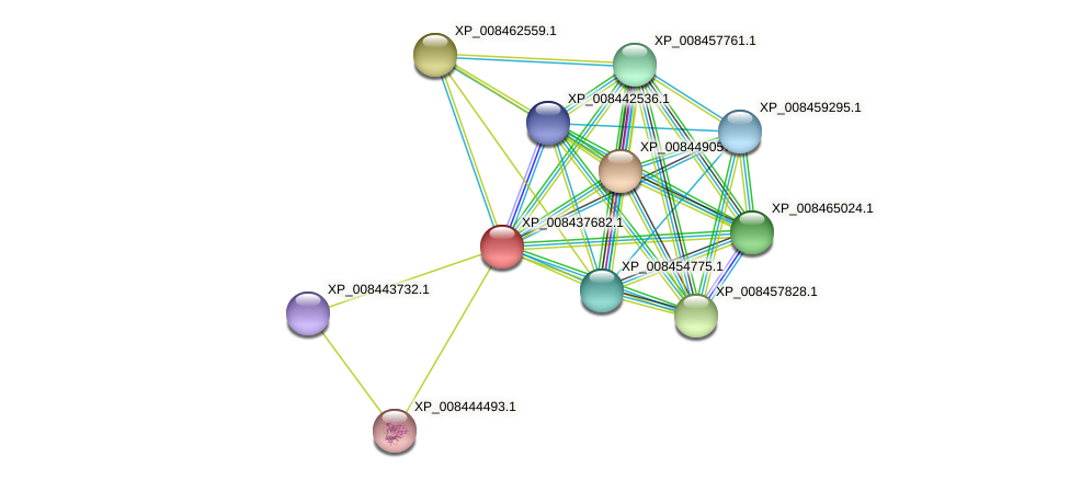 XP_008437682.1 protein (Cucumis melo) - STRING interaction network