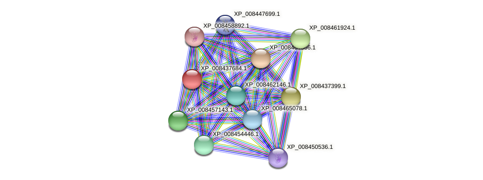 XP_008437684.1 protein (Cucumis melo) - STRING interaction network