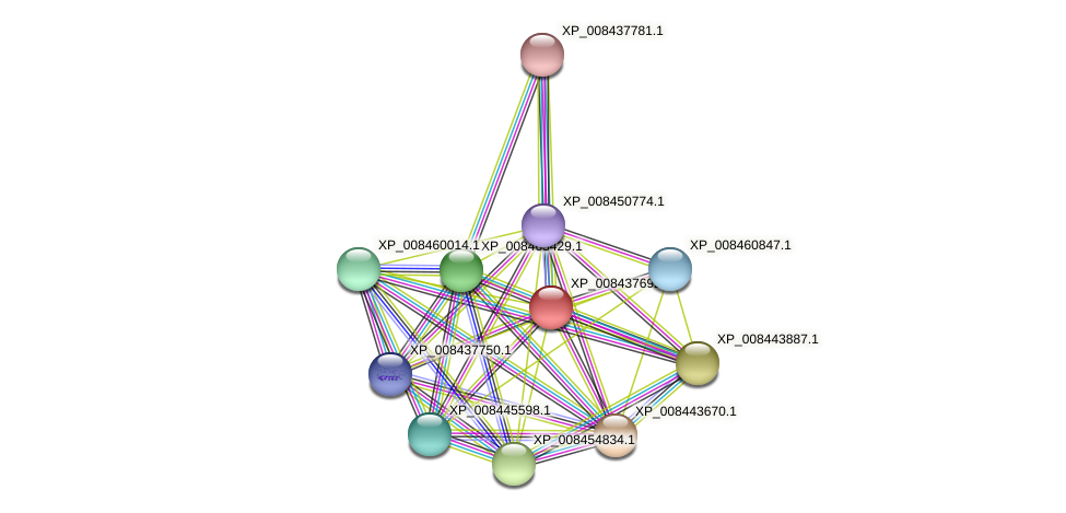 XP_008437692.1 protein (Cucumis melo) - STRING interaction network