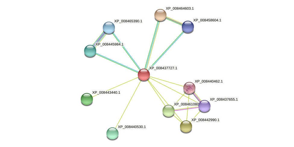XP_008437727.1 protein (Cucumis melo) - STRING interaction network