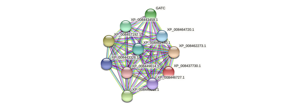 XP_008437730.1 protein (Cucumis melo) - STRING interaction network