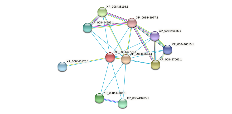 XP_008437770.1 protein (Cucumis melo) - STRING interaction network