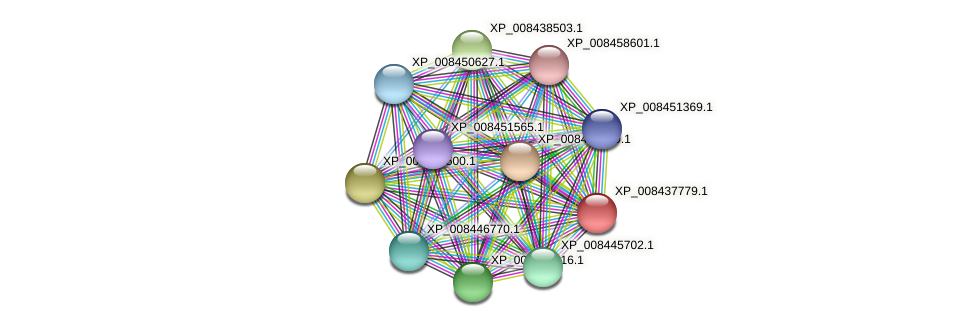 XP_008437779.1 protein (Cucumis melo) - STRING interaction network