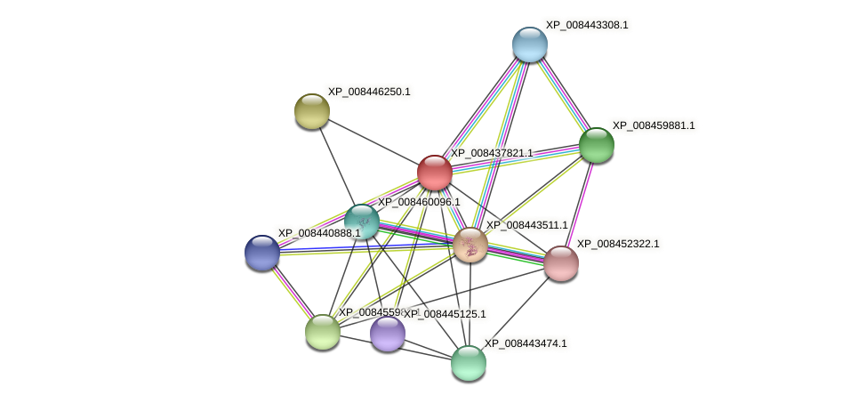 XP_008437821.1 protein (Cucumis melo) - STRING interaction network