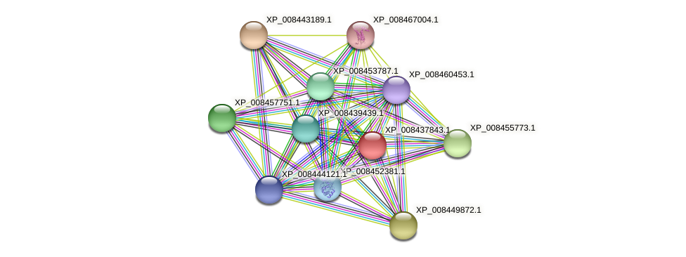 XP_008437843.1 protein (Cucumis melo) - STRING interaction network
