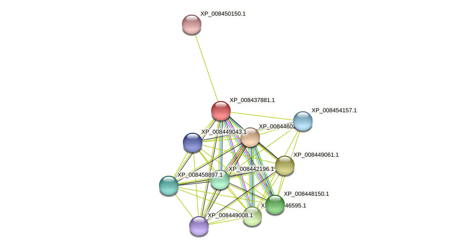 XP_008437881.1 protein (Cucumis melo) - STRING interaction network