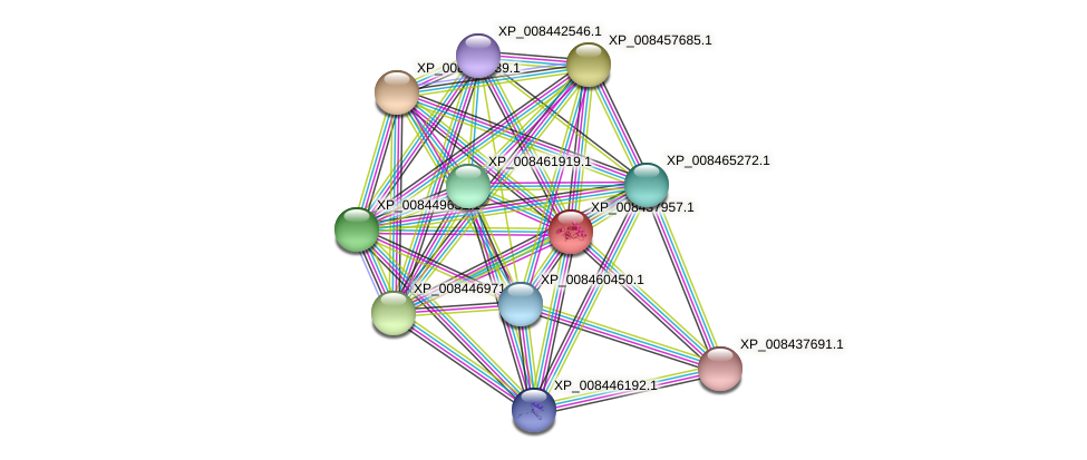 XP_008437957.1 protein (Cucumis melo) - STRING interaction network