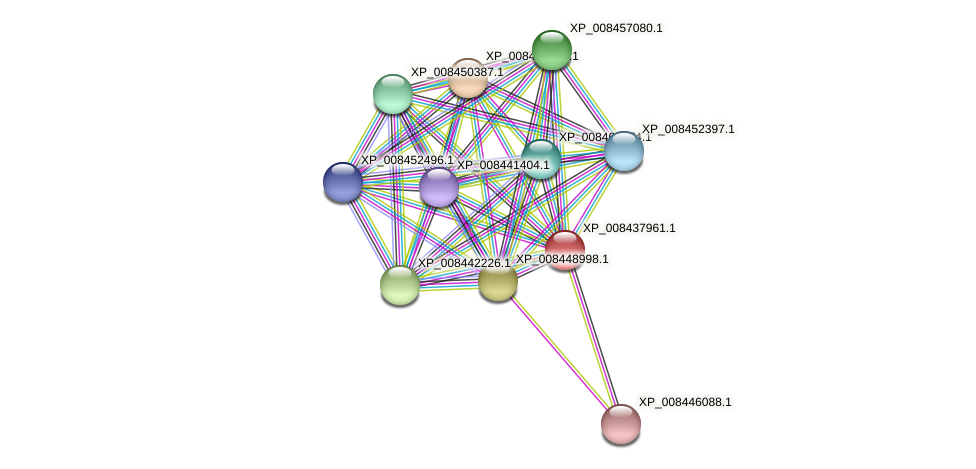 XP_008437961.1 protein (Cucumis melo) - STRING interaction network