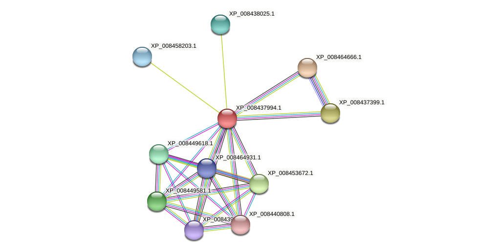 XP_008437994.1 protein (Cucumis melo) - STRING interaction network