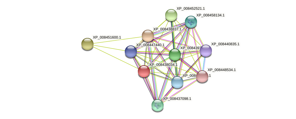 XP_008438034.1 protein (Cucumis melo) - STRING interaction network