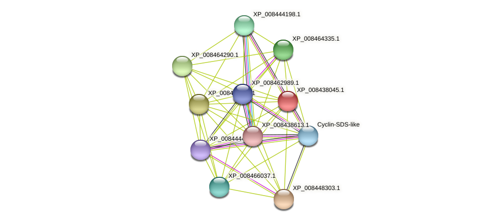 XP_008438045.1 protein (Cucumis melo) - STRING interaction network