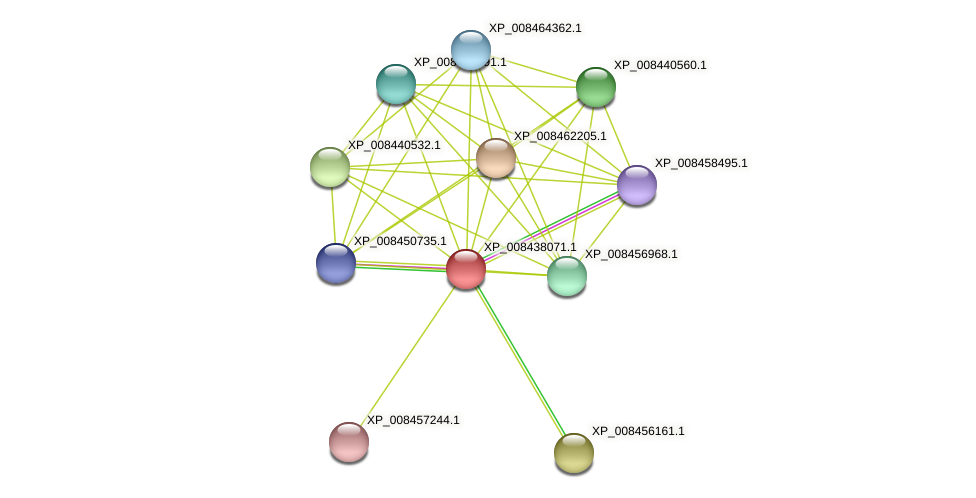 XP_008438071.1 protein (Cucumis melo) - STRING interaction network