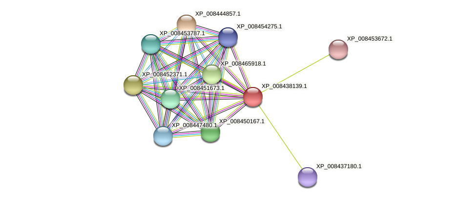 XP_008438139.1 protein (Cucumis melo) - STRING interaction network