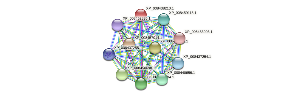 XP_008438210.1 protein (Cucumis melo) - STRING interaction network