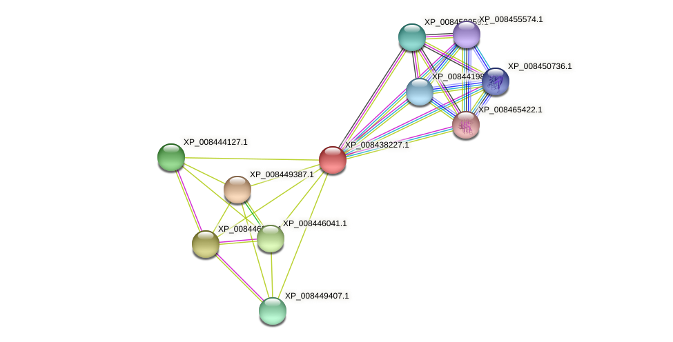 XP_008438227.1 protein (Cucumis melo) - STRING interaction network