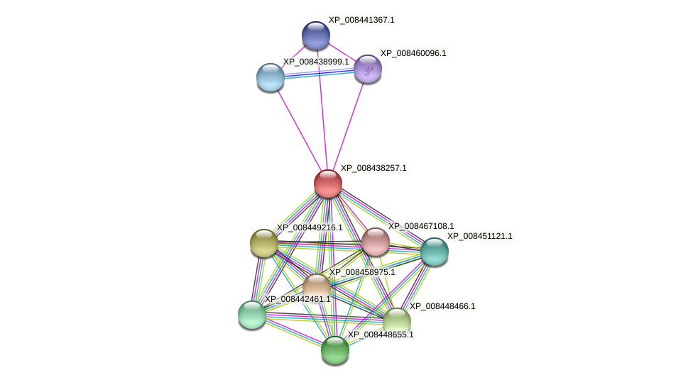 XP_008438257.1 protein (Cucumis melo) - STRING interaction network