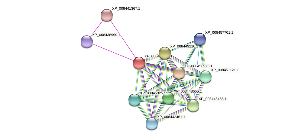 XP_008438258.1 protein (Cucumis melo) - STRING interaction network
