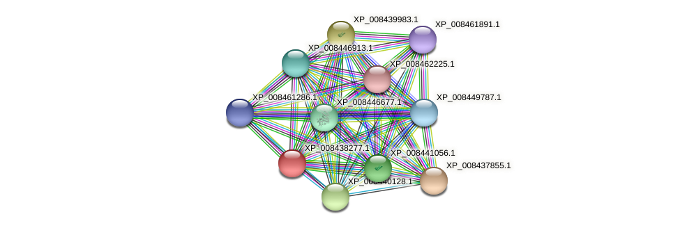 XP_008438277.1 protein (Cucumis melo) - STRING interaction network