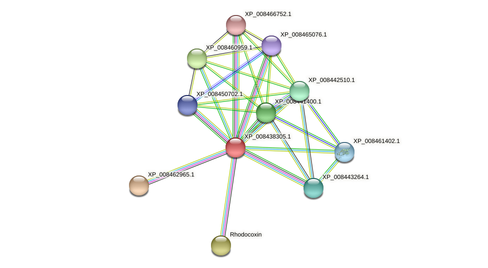 XP_008438305.1 protein (Cucumis melo) - STRING interaction network
