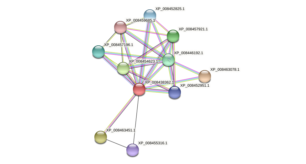 XP_008438362.1 protein (Cucumis melo) - STRING interaction network