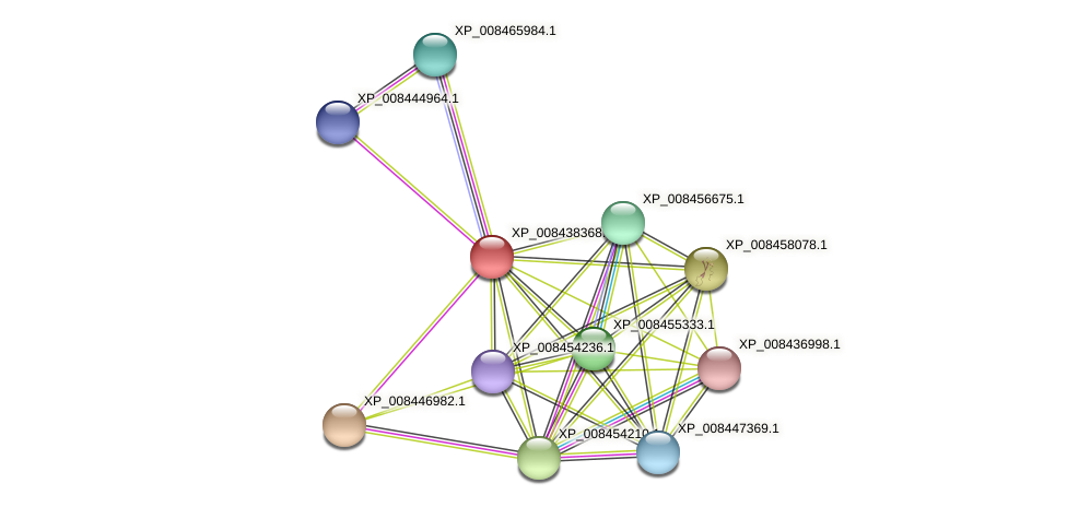 XP_008438368.1 protein (Cucumis melo) - STRING interaction network