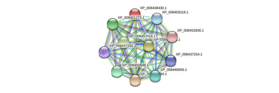 XP_008438430.1 protein (Cucumis melo) - STRING interaction network