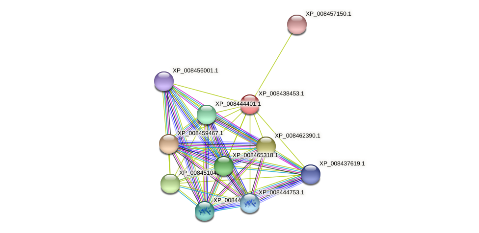 XP_008438453.1 protein (Cucumis melo) - STRING interaction network