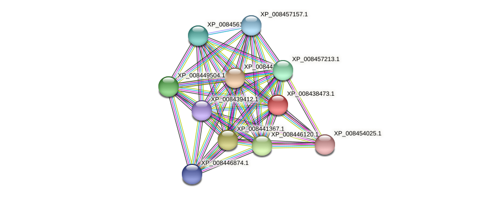XP_008438473.1 protein (Cucumis melo) - STRING interaction network