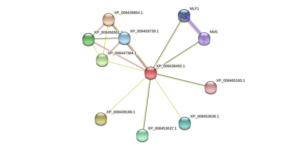 XP_008438492.1 protein (Cucumis melo) - STRING interaction network