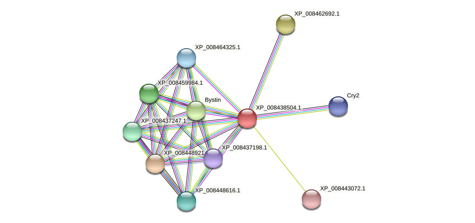 XP_008438504.1 protein (Cucumis melo) - STRING interaction network