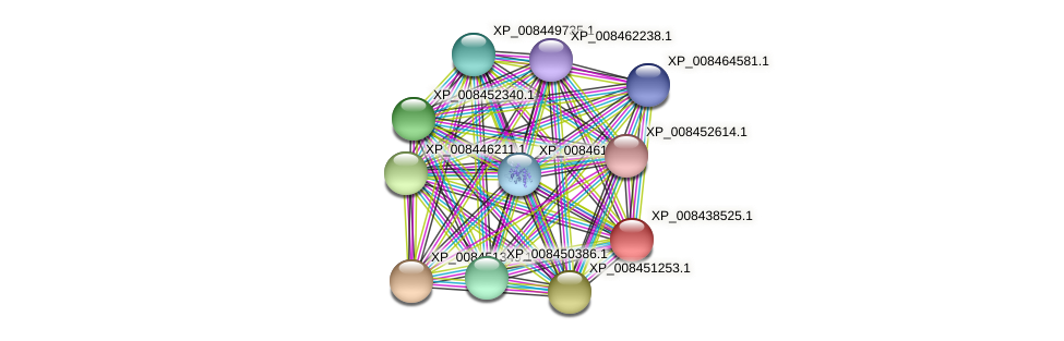 XP_008438525.1 protein (Cucumis melo) - STRING interaction network