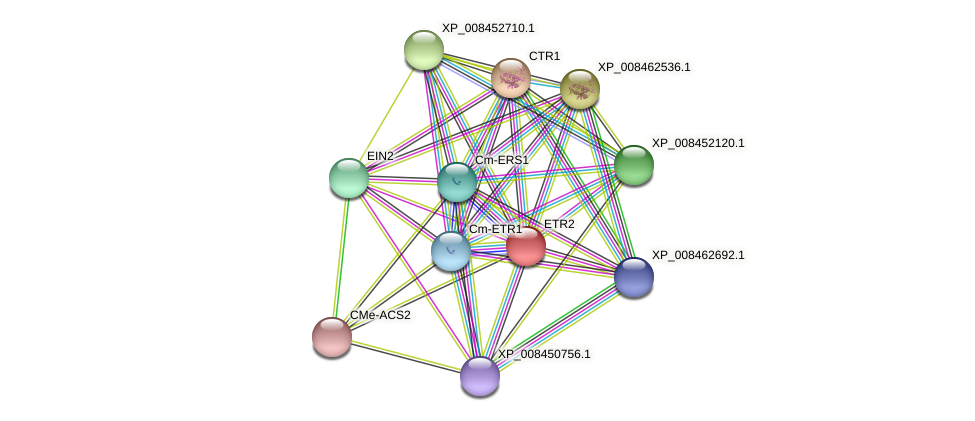 ETR2 protein (Cucumis melo) - STRING interaction network