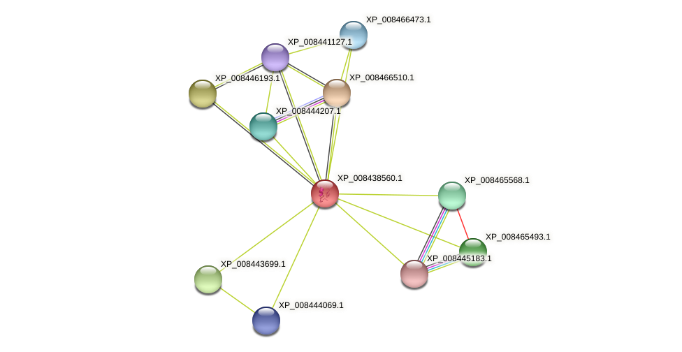 XP_008438560.1 protein (Cucumis melo) - STRING interaction network