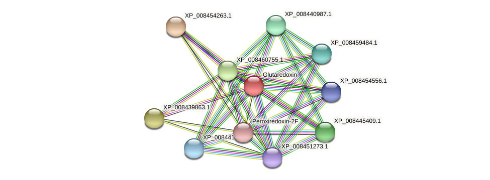 XP_008438572.1 protein (Cucumis melo) - STRING interaction network