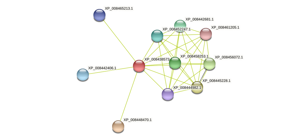 XP_008438573.1 protein (Cucumis melo) - STRING interaction network