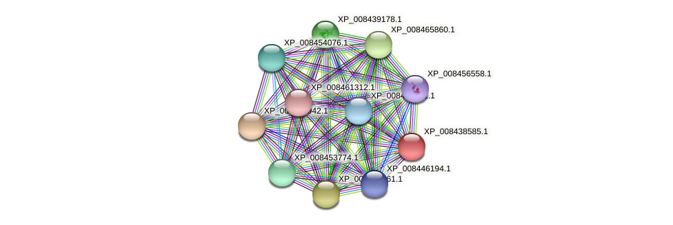 XP_008438585.1 protein (Cucumis melo) - STRING interaction network