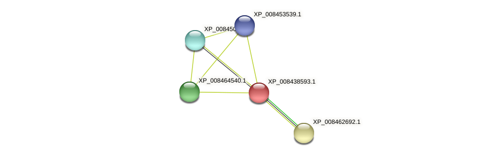 XP_008438593.1 protein (Cucumis melo) - STRING interaction network