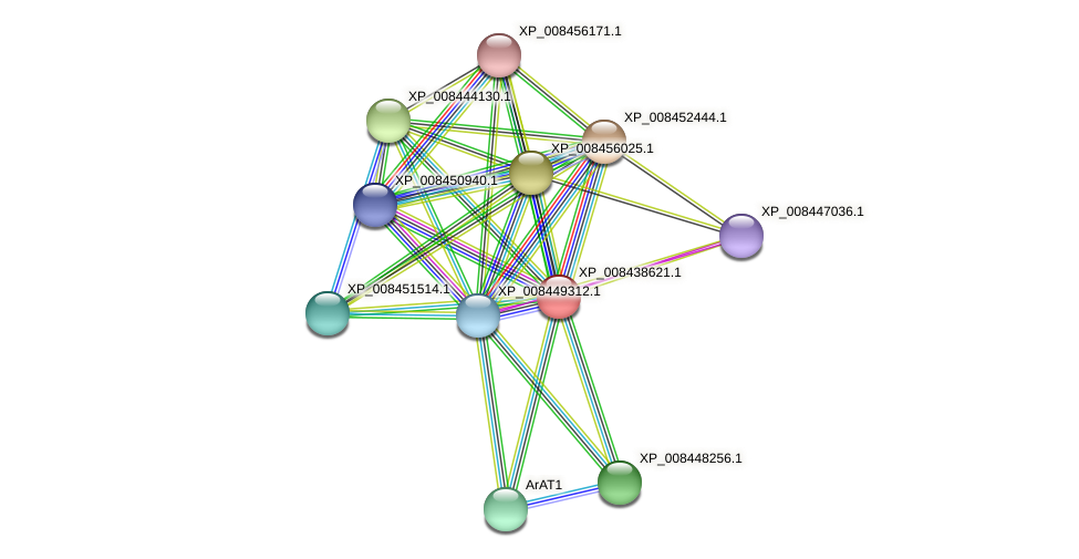 XP_008438621.1 protein (Cucumis melo) - STRING interaction network