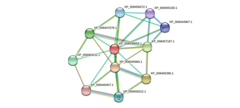 XP_008438655.1 protein (Cucumis melo) - STRING interaction network