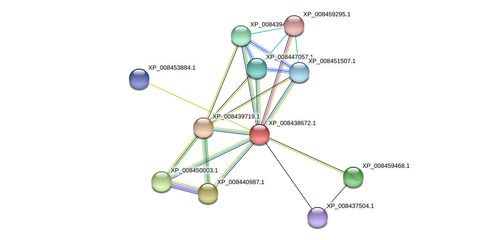 XP_008438672.1 protein (Cucumis melo) - STRING interaction network