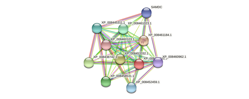 XP_008438686.1 protein (Cucumis melo) - STRING interaction network